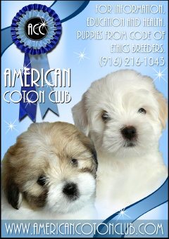 Champion Coton de Tulear and Coton puppies available