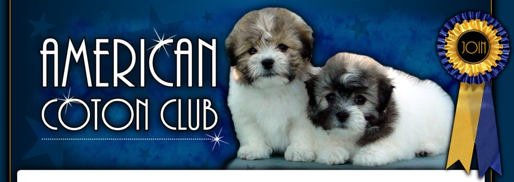 tri-color Coton de Tulear puppies banner