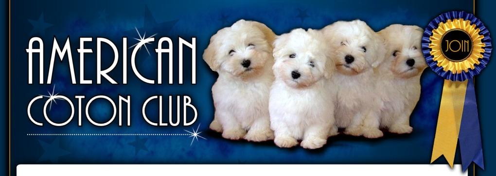 Coton de Tulear Temperament - American Coton Club