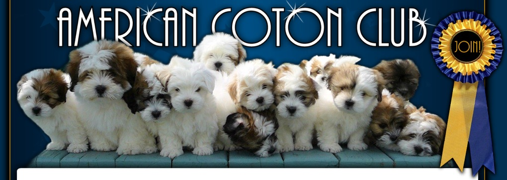 Coton de Tulear puppies from reputable breeders