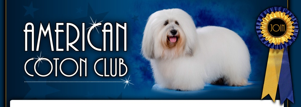 photo of Champion Coton de Tulear